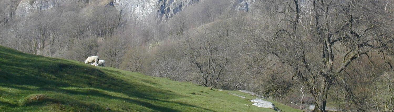 stalkeldaway - Giggleswicj-Scar.jpg